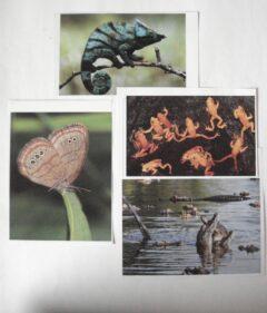 Vis-insekt-reptiel